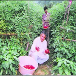 Uttarakhand Farmer shows new ideas