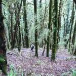 Save Jungle: Uttarakhandi Way..